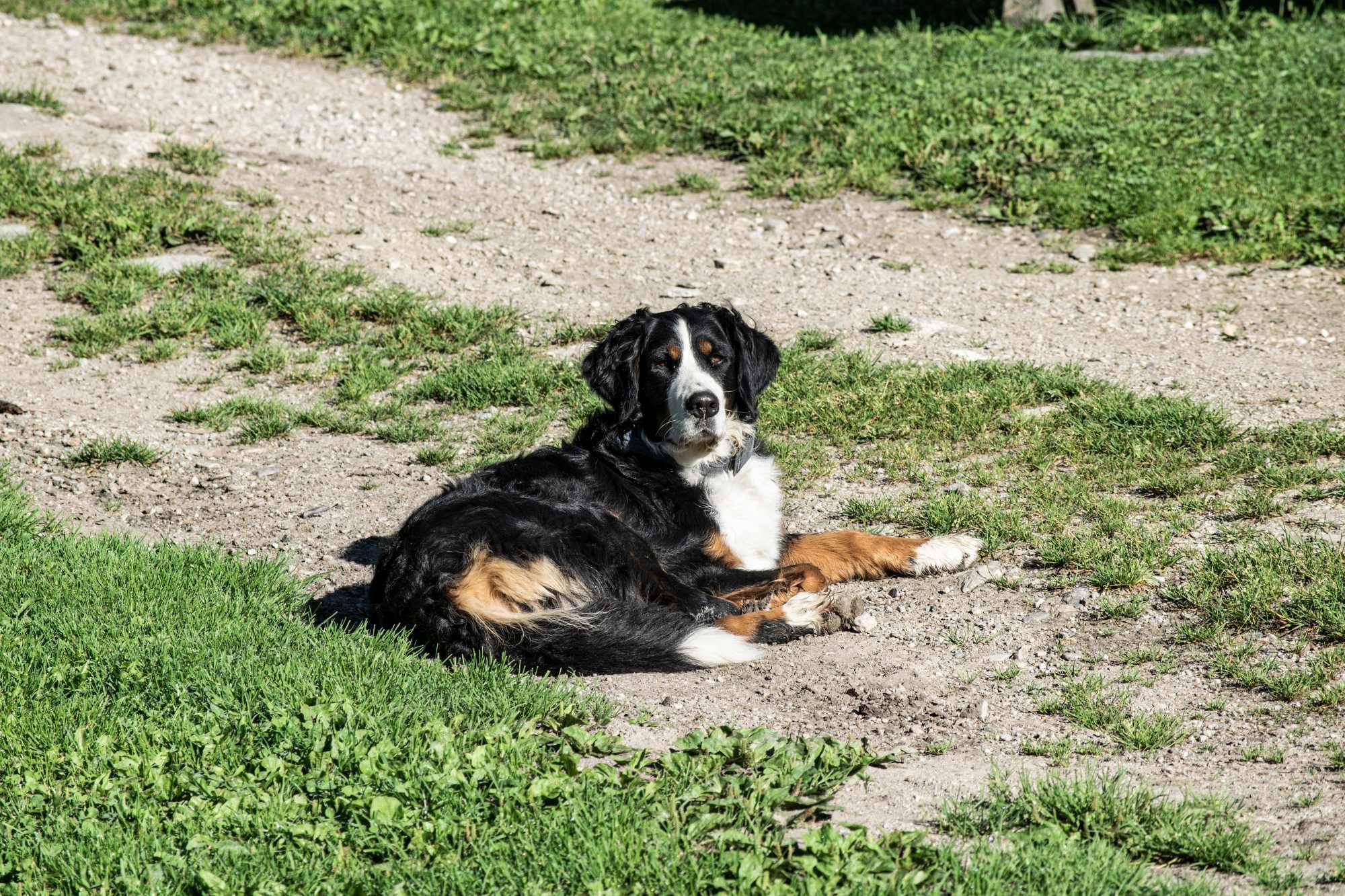 Besamt vom hund Habe ein